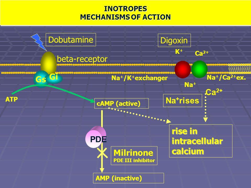 Meccanismo dazione degli inotropi positivi Gs Gi beta-receptor Na + /Ca 2+ ex. Na + /K + exchanger ATP cAMP (active) AMP (inactive) PDE rise in intrac