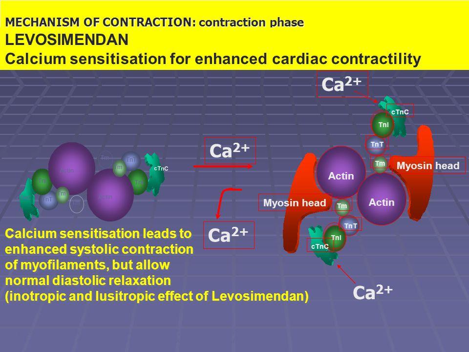 Il meccanismo contrattile: fase di contrazione Actin TnT cTnC TnI Tm TnI cTnC TnI cTnC TnI Tm TnT Tm Actin Tm TnT Myosin head Ca 2+ Warber K.D.