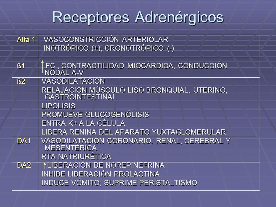 Receptores Adrenérgicos Alfa 1 VASOCONSTRICCIÓN ARTERIOLAR INOTRÓPICO (+), CRONOTRÓPICO (-) INOTRÓPICO (+), CRONOTRÓPICO (-) ß1 FC, CONTRACTILIDAD MIOCÁRDICA, CONDUCCIÓN NODAL A-V ß2 VASODILATACIÓN RELAJACIÓN MÚSCULO LISO BRONQUIAL, UTERINO, GASTROINTESTINAL RELAJACIÓN MÚSCULO LISO BRONQUIAL, UTERINO, GASTROINTESTINAL LIPÓLISIS LIPÓLISIS PROMUEVE GLUCOGENÓLISIS PROMUEVE GLUCOGENÓLISIS ENTRA K+ A LA CÉLULA ENTRA K+ A LA CÉLULA LIBERA RENINA DEL APARATO YUXTAGLOMERULAR LIBERA RENINA DEL APARATO YUXTAGLOMERULAR DA1 VASODILATACIÓN CORONARIO, RENAL, CEREBRAL Y MESENTÉRICA RTA NATRIURÉTICA RTA NATRIURÉTICA DA2 LIBERACIÓN DE NOREPINEFRINA INHIBE LIBERACIÓN PROLACTINA INHIBE LIBERACIÓN PROLACTINA INDUCE VÓMITO, SUPRIME PERISTALTISMO INDUCE VÓMITO, SUPRIME PERISTALTISMO