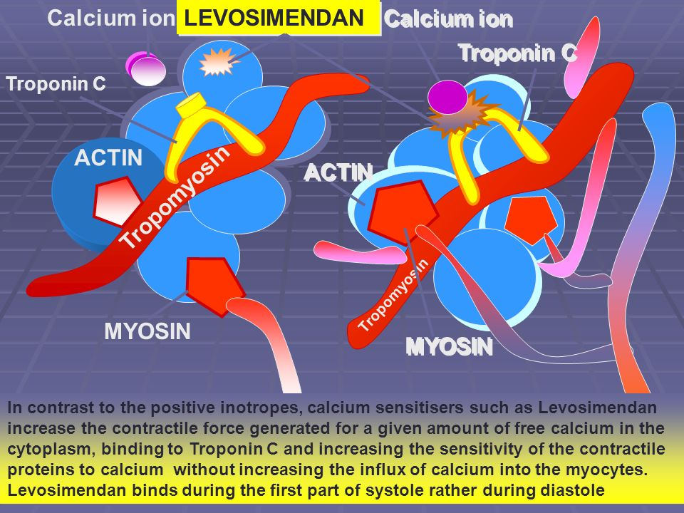 Troponin C Calcium ion ACTIN MYOSIN Tropomyosin Troponin C ACTIN MYOSIN Calcium ion LEVOSIMENDAN In contrast to the positive inotropes, calcium sensitisers such as Levosimendan increase the contractile force generated for a given amount of free calcium in the cytoplasm, binding to Troponin C and increasing the sensitivity of the contractile proteins to calcium without increasing the influx of calcium into the myocytes.