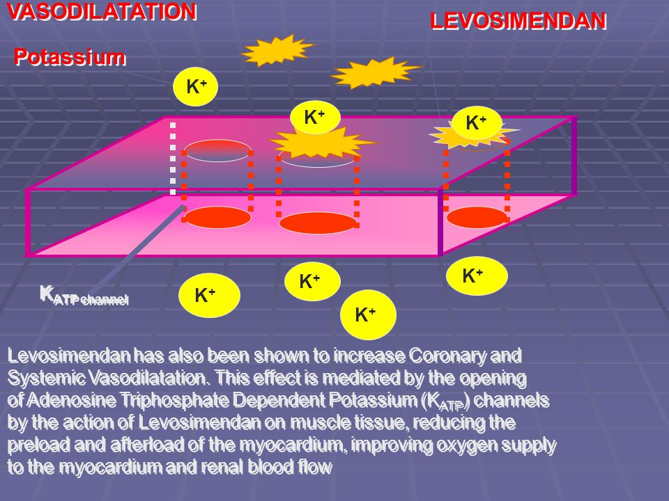 K+K+ K+K+ K+K+ K+K+ K+K+ K+K+ K+K+ Levosimendan has also been shown to increase Coronary and Systemic Vasodilatation. This effect is mediated by the o