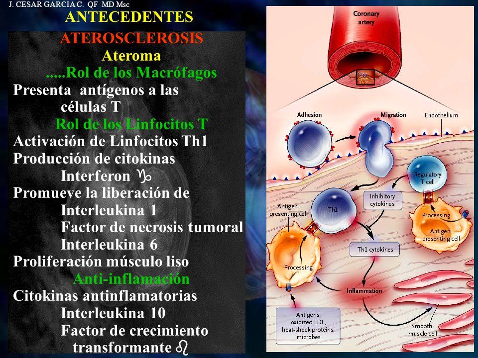 ANTECEDENTES ATEROSCLEROSIS Ateroma.....Rol de los Macrófagos Presenta antígenos a las células T Rol de los Linfocitos T Activación de Linfocitos Th1