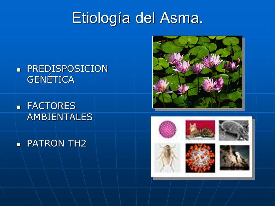 Etiología del Asma. PREDISPOSICION GENÉTICA PREDISPOSICION GENÉTICA FACTORES AMBIENTALES FACTORES AMBIENTALES PATRON TH2 PATRON TH2