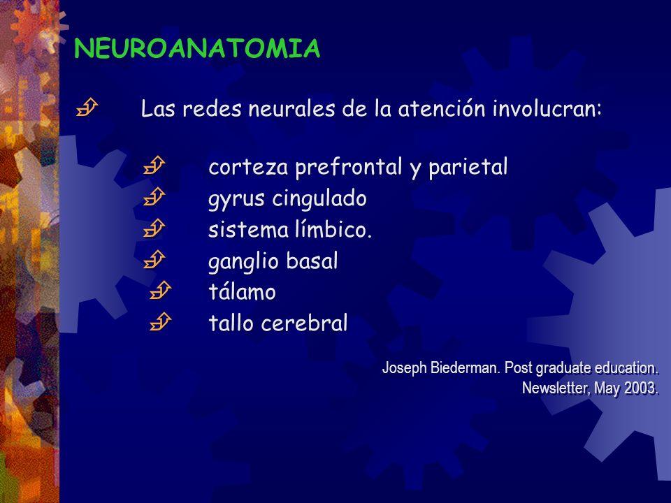 NEUROANATOMIA Las redes neurales de la atención involucran: corteza prefrontal y parietal gyrus cingulado sistema límbico. ganglio basal tálamo tallo