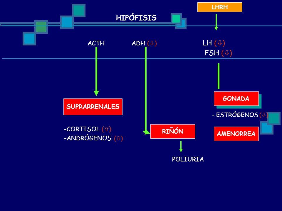 ACTH ADH ( ) LH ( ) FSH ( ) LHRH SUPRARRENALES -CORTISOL ( ) -ANDRÓGENOS ( ) RIÑÓN GONADA POLIURIA - ESTRÓGENOS ( ) AMENORREA HIPÓFISIS