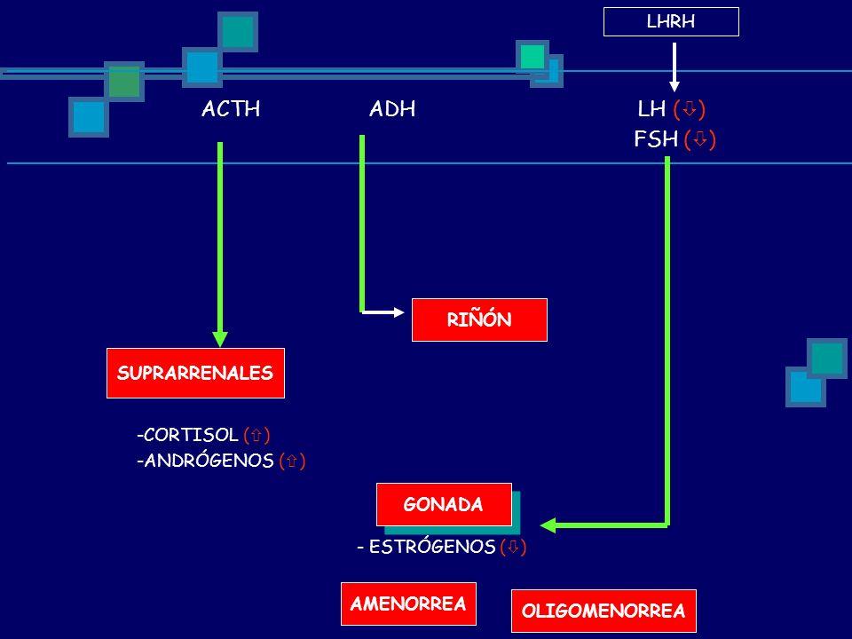 ACTH ADH LH ( ) FSH ( ) LHRH SUPRARRENALES -CORTISOL ( ) -ANDRÓGENOS ( ) RIÑÓN GONADA - ESTRÓGENOS ( ) AMENORREA OLIGOMENORREA