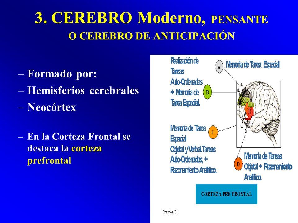 3. CEREBRO Moderno, PENSANTE O CEREBRO DE ANTICIPACIÓN –Formado por: –Hemisferios cerebrales –Neocórtex –En la Corteza Frontal se destaca la corteza p