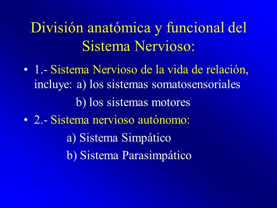 División anatómica y funcional del Sistema Nervioso: 1.- Sistema Nervioso de la vida de relación, incluye: a) los sistemas somatosensoriales b) los si
