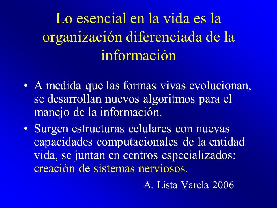 Lo esencial en la vida es la organización diferenciada de la información A medida que las formas vivas evolucionan, se desarrollan nuevos algoritmos p
