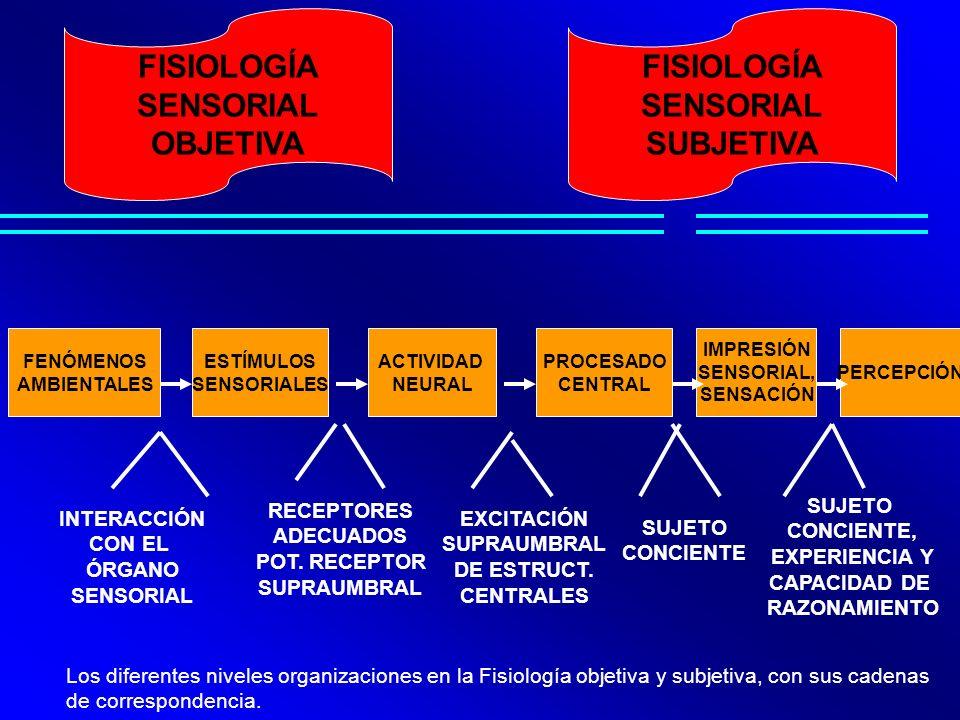 FENÓMENOS AMBIENTALES ESTÍMULOS SENSORIALES ACTIVIDAD NEURAL PROCESADO CENTRAL IMPRESIÓN SENSORIAL, SENSACIÓN PERCEPCIÓN INTERACCIÓN CON EL ÓRGANO SEN