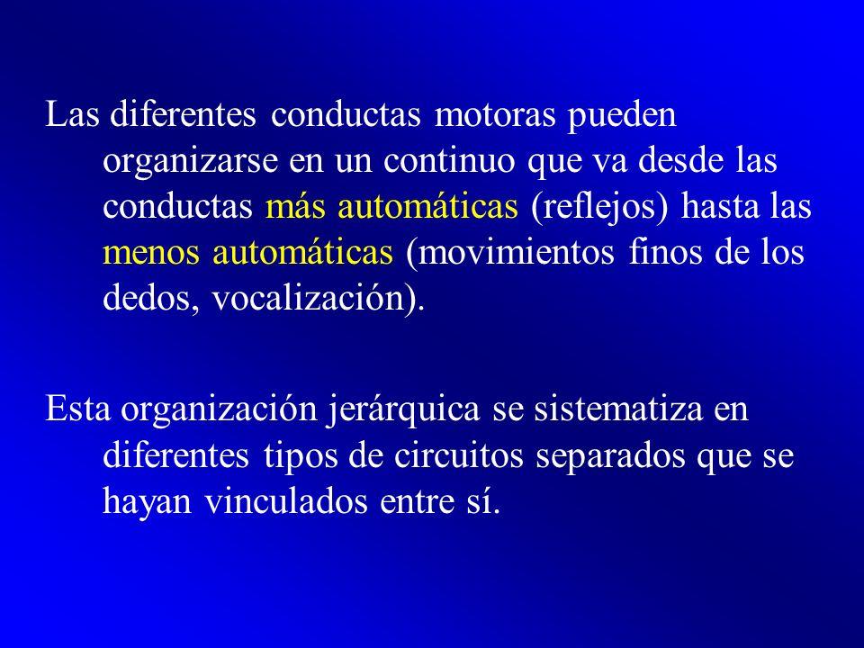 Las diferentes conductas motoras pueden organizarse en un continuo que va desde las conductas más automáticas (reflejos) hasta las menos automáticas (