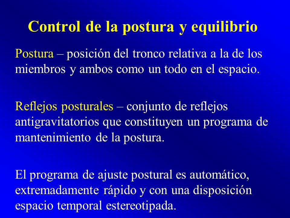 Control de la postura y equilibrio Postura – posición del tronco relativa a la de los miembros y ambos como un todo en el espacio. Reflejos posturales
