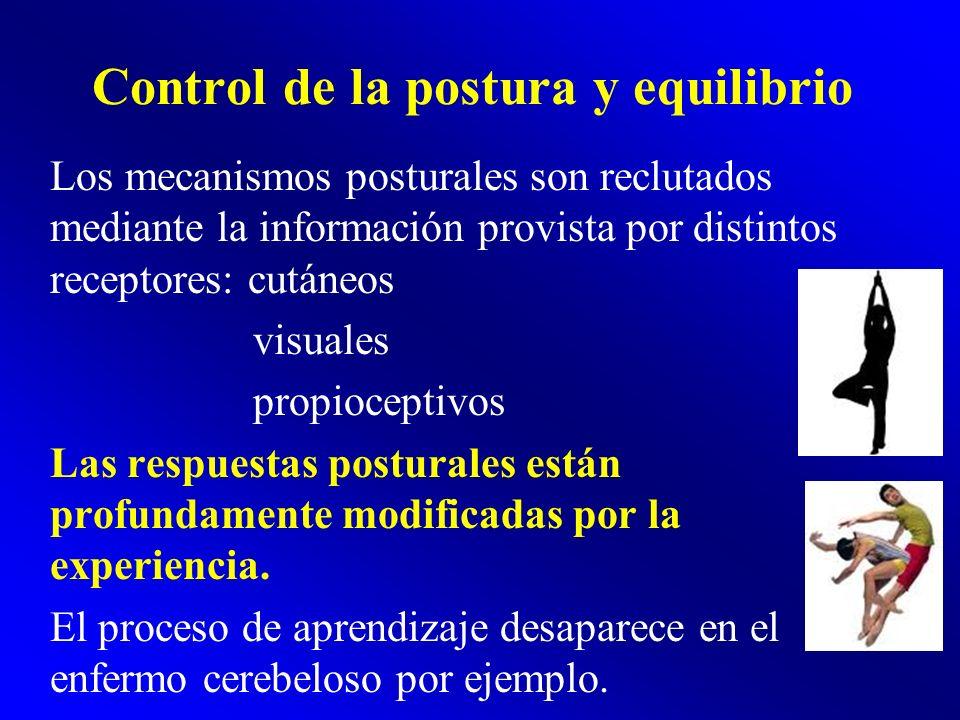 Control de la postura y equilibrio Los mecanismos posturales son reclutados mediante la información provista por distintos receptores: cutáneos visual