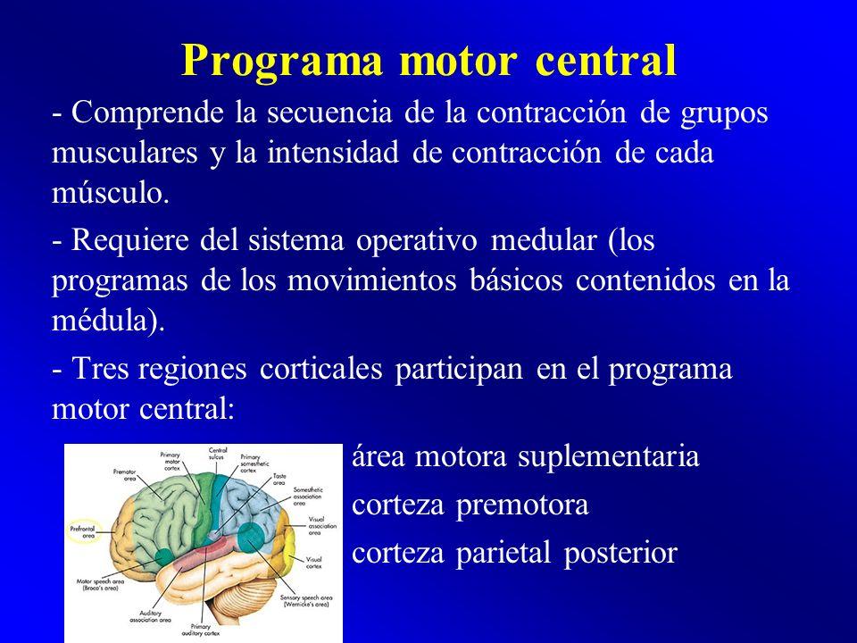 Programa motor central - Comprende la secuencia de la contracción de grupos musculares y la intensidad de contracción de cada músculo. - Requiere del