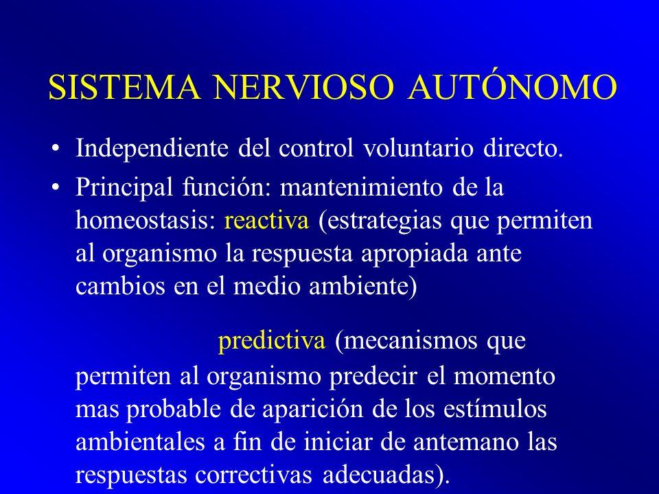 SISTEMA NERVIOSO AUTÓNOMO Independiente del control voluntario directo. Principal función: mantenimiento de la homeostasis: reactiva (estrategias que