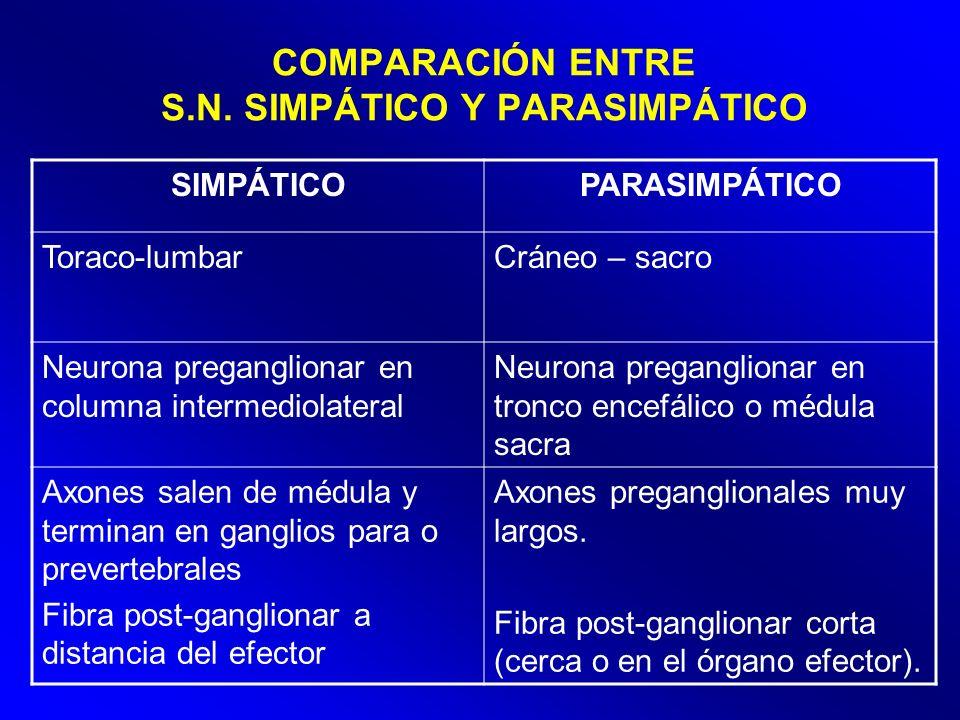 COMPARACIÓN ENTRE S.N. SIMPÁTICO Y PARASIMPÁTICO SIMPÁTICOPARASIMPÁTICO Toraco-lumbarCráneo – sacro Neurona preganglionar en columna intermediolateral
