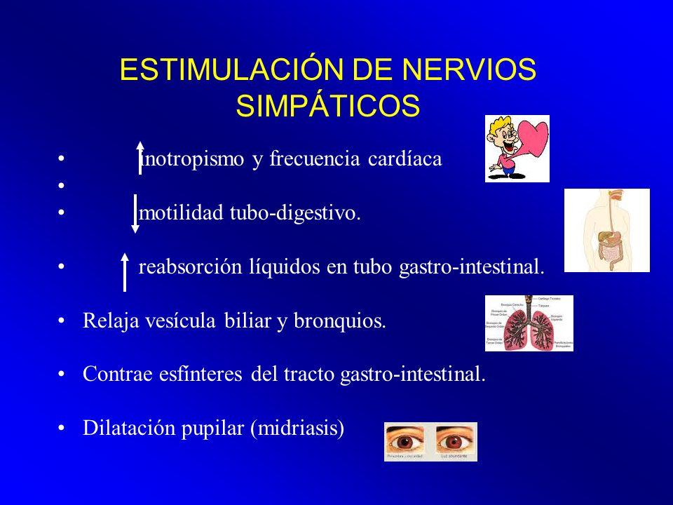 ESTIMULACIÓN DE NERVIOS SIMPÁTICOS inotropismo y frecuencia cardíaca motilidad tubo-digestivo. reabsorción líquidos en tubo gastro-intestinal. Relaja