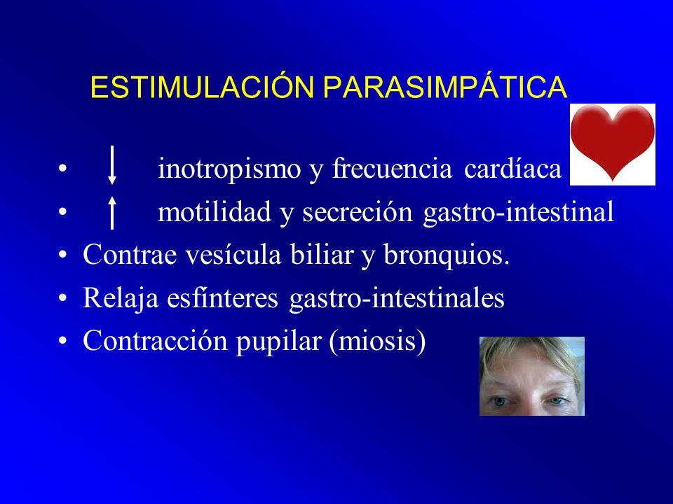 ESTIMULACIÓN PARASIMPÁTICA inotropismo y frecuencia cardíaca motilidad y secreción gastro-intestinal Contrae vesícula biliar y bronquios. Relaja esfín
