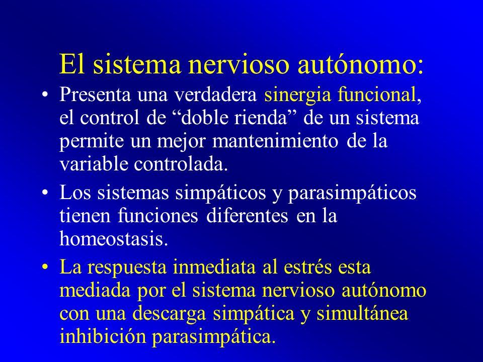 El sistema nervioso autónomo: Presenta una verdadera sinergia funcional, el control de doble rienda de un sistema permite un mejor mantenimiento de la