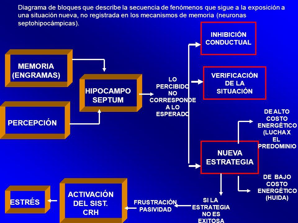 Diagrama de bloques que describe la secuencia de fenómenos que sigue a la exposición a una situación nueva, no registrada en los mecanismos de memoria