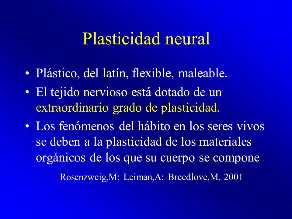 Plasticidad neural Plástico, del latín, flexible, maleable. El tejido nervioso está dotado de un extraordinario grado de plasticidad. Los fenómenos de