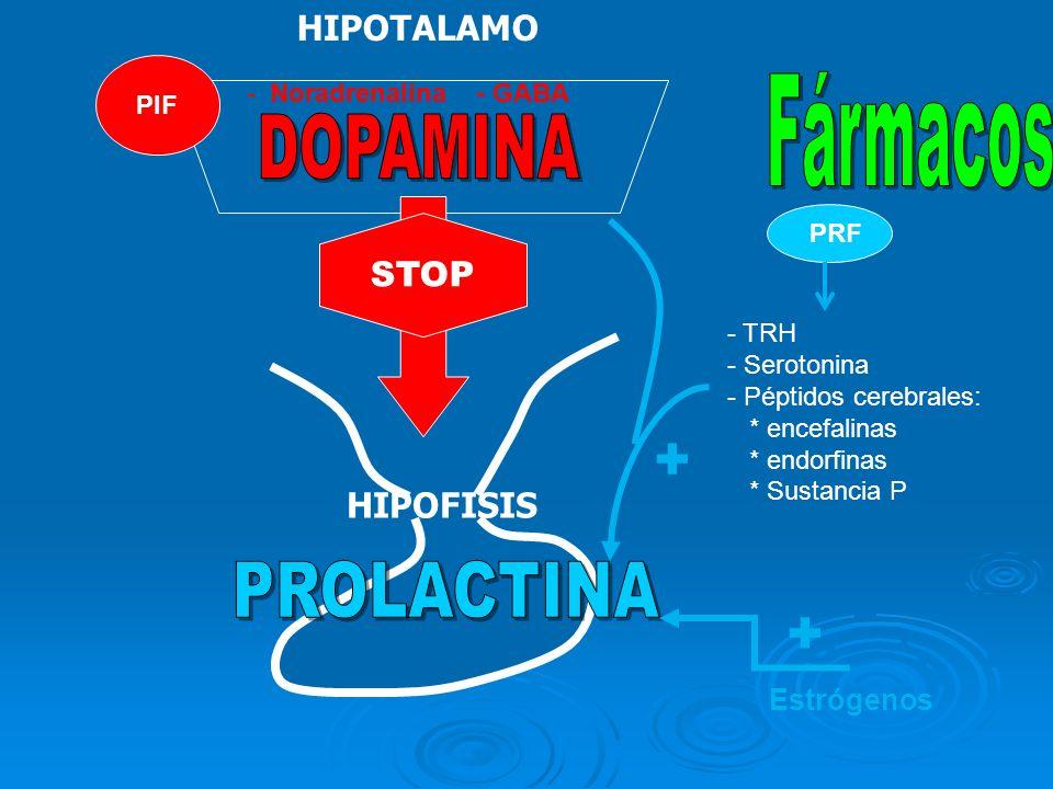 PRF STOP Estrógenos + - - TRH - - Serotonina - - Péptidos cerebrales: * encefalinas * endorfinas * Sustancia P + HIPOTALAMO PIF - - Noradrenalina - GA