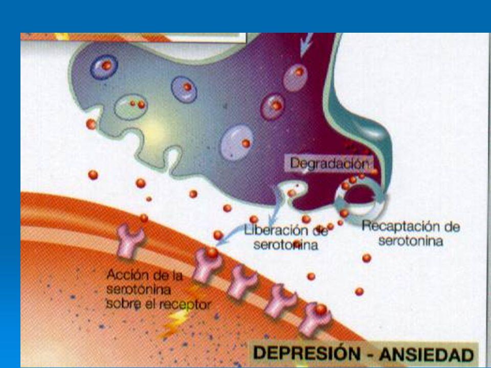Diversos antidepresivos inciden en la actividad del eje H.H.Adrenal y modifican la inmunidad humoral y celular.