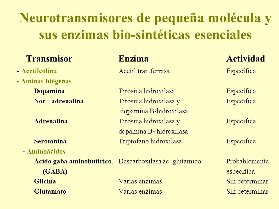 Neurotransmisores de pequeña molécula y sus enzimas bio-sintéticas esenciales TransmisorEnzimaActividad - AcetilcolinaAcetil.tran.ferrasa.Específica -