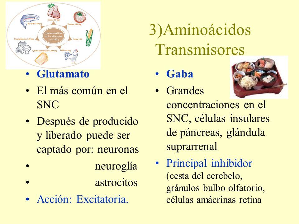 3)Aminoácidos Transmisores Glutamato El más común en el SNC Después de producido y liberado puede ser captado por: neuronas neuroglía astrocitos Acció