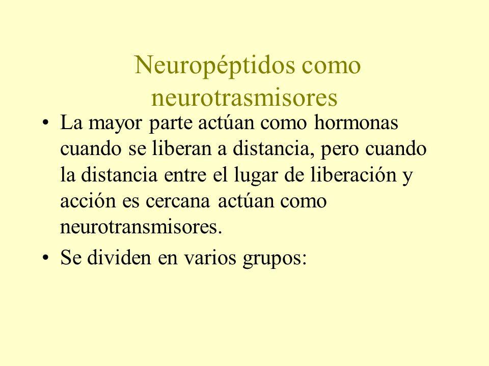 Neuropéptidos como neurotrasmisores La mayor parte actúan como hormonas cuando se liberan a distancia, pero cuando la distancia entre el lugar de libe