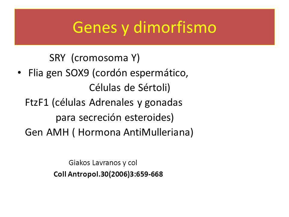 Genes y dimorfismo Gen SRY (cromosoma Y) Flia gen SOX9 (cordón espermático, Células de Sértoli) FtzF1 (células Adrenales y gonadas para secreción este