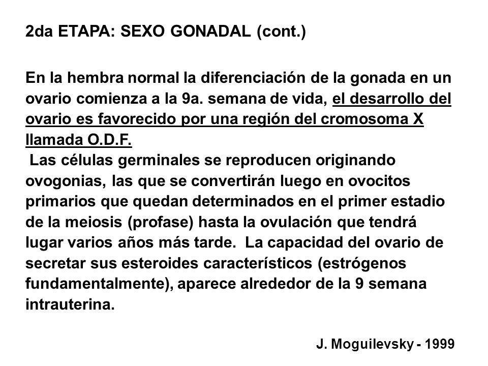 2da ETAPA: SEXO GONADAL (cont.) En la hembra normal la diferenciación de la gonada en un ovario comienza a la 9a. semana de vida, el desarrollo del ov