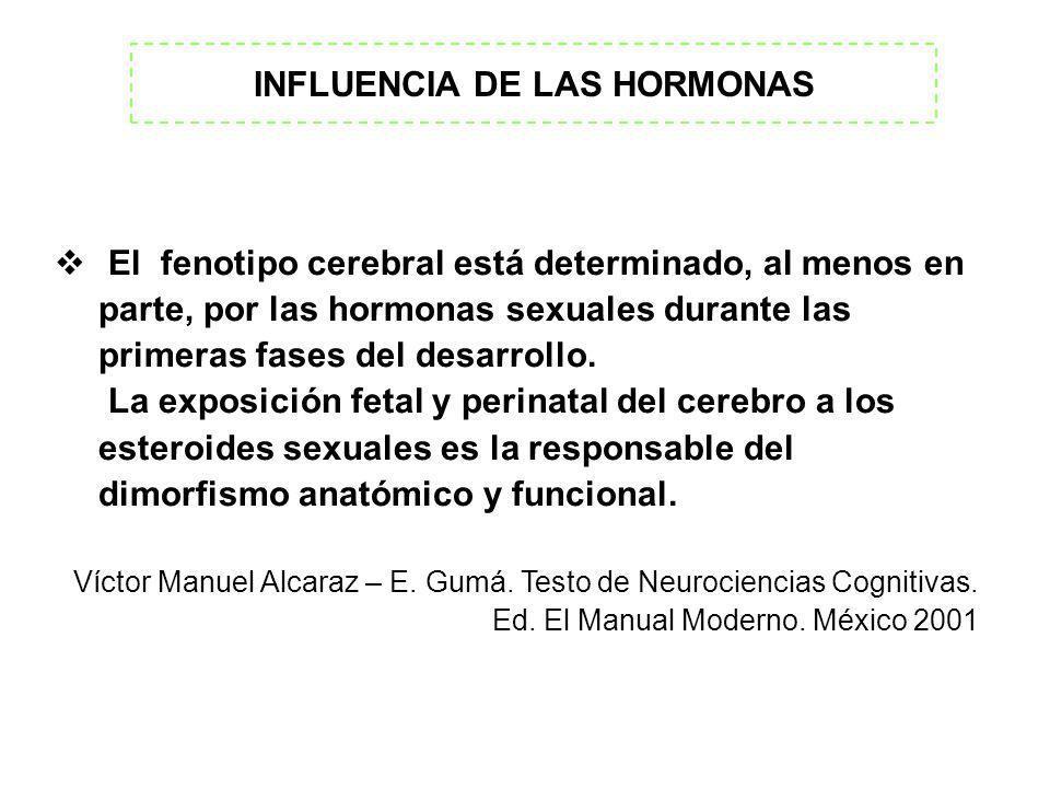 INFLUENCIA DE LAS HORMONAS El fenotipo cerebral está determinado, al menos en parte, por las hormonas sexuales durante las primeras fases del desarrol
