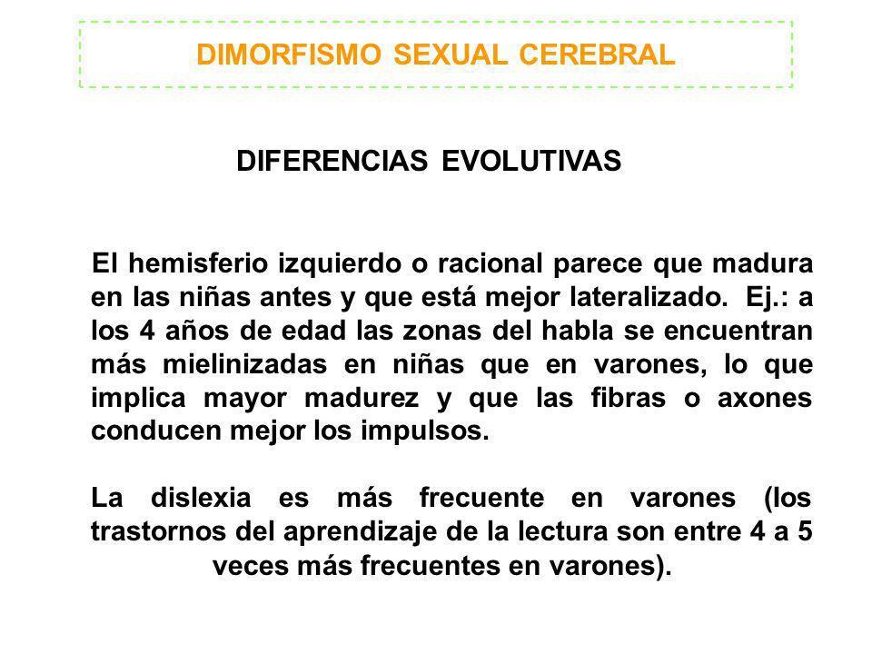 DIMORFISMO SEXUAL CEREBRAL DIFERENCIAS EVOLUTIVAS El hemisferio izquierdo o racional parece que madura en las niñas antes y que está mejor lateralizad