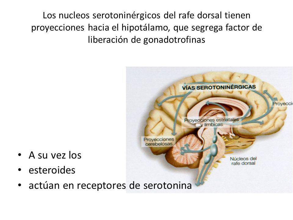 Los nucleos serotoninérgicos del rafe dorsal tienen proyecciones hacia el hipotálamo, que segrega factor de liberación de gonadotrofinas A su vez los