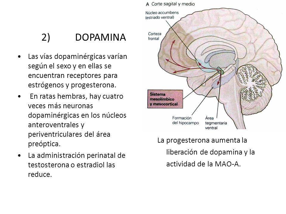 2) DOPAMINA Las vías dopaminérgicas varían según el sexo y en ellas se encuentran receptores para estrógenos y progesterona. En ratas hembras, hay cua