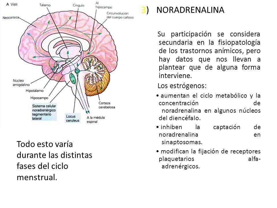 3) NORADRENALINA Su participación se considera secundaria en la fisiopatología de los trastornos anímicos, pero hay datos que nos llevan a plantear qu