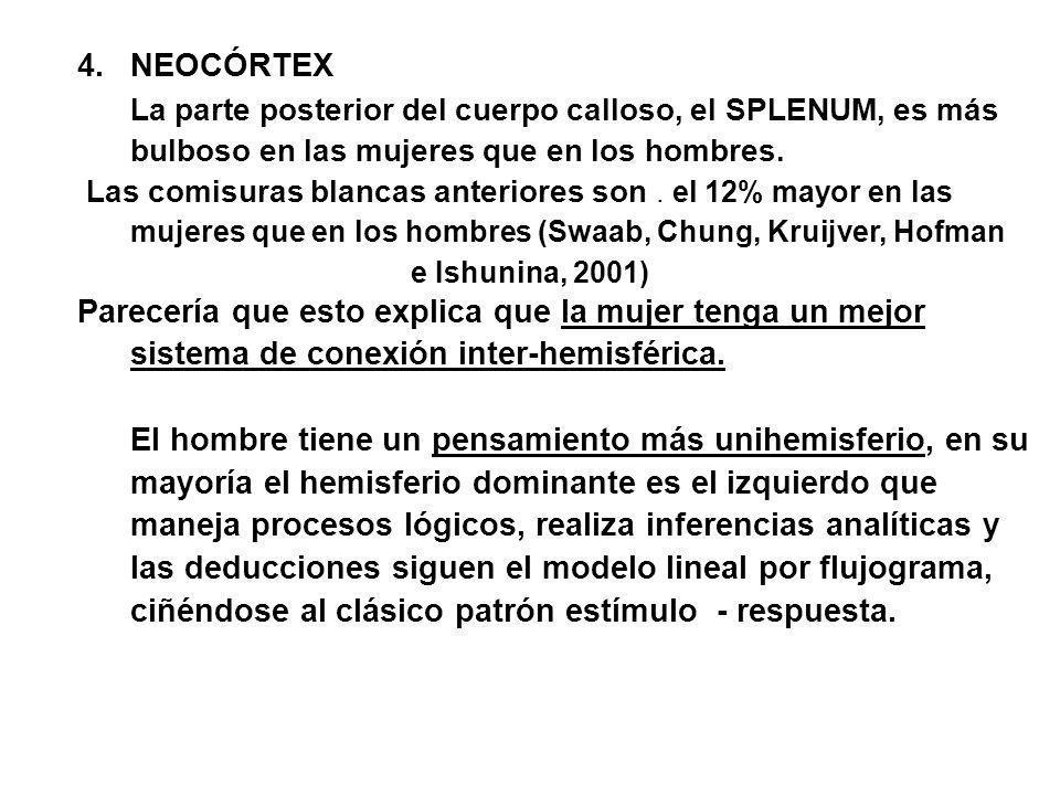 4.NEOCÓRTEX La parte posterior del cuerpo calloso, el SPLENUM, es más bulboso en las mujeres que en los hombres. Las comisuras blancas anteriores son.