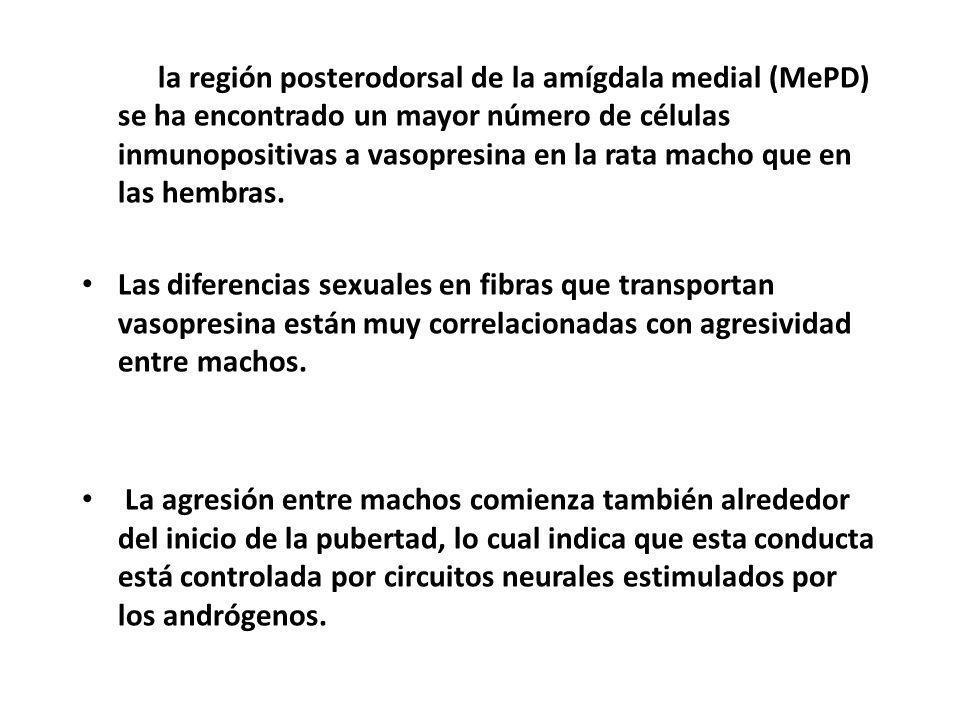 En la región posterodorsal de la amígdala medial (MePD) se ha encontrado un mayor número de células inmunopositivas a vasopresina en la rata macho que