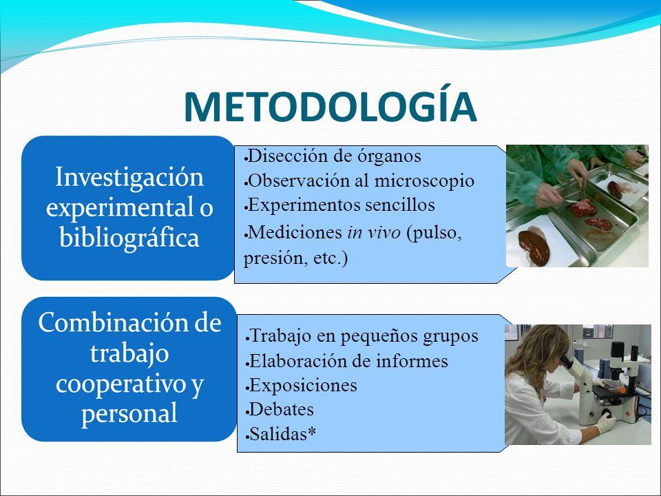METODOLOGÍA Disección de órganos Observación al microscopio Experimentos sencillos Mediciones in vivo (pulso, presión, etc.) Trabajo en pequeños grupo