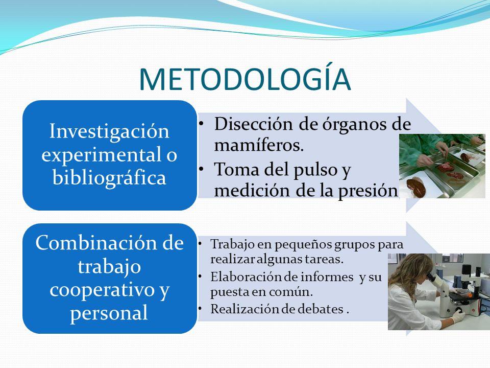 METODOLOGÍA Disección de órganos de mamíferos. Toma del pulso y medición de la presión. Investigación experimental o bibliográfica Trabajo en pequeños