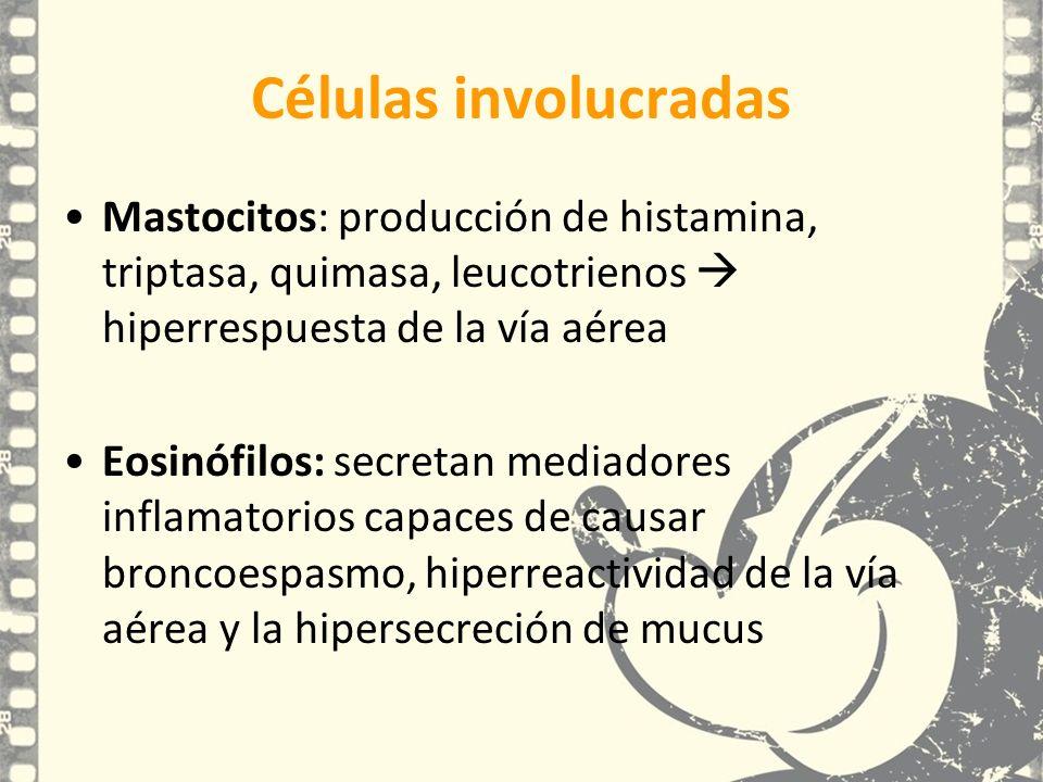 Células involucradas Mastocitos: producción de histamina, triptasa, quimasa, leucotrienos hiperrespuesta de la vía aérea Eosinófilos: secretan mediado