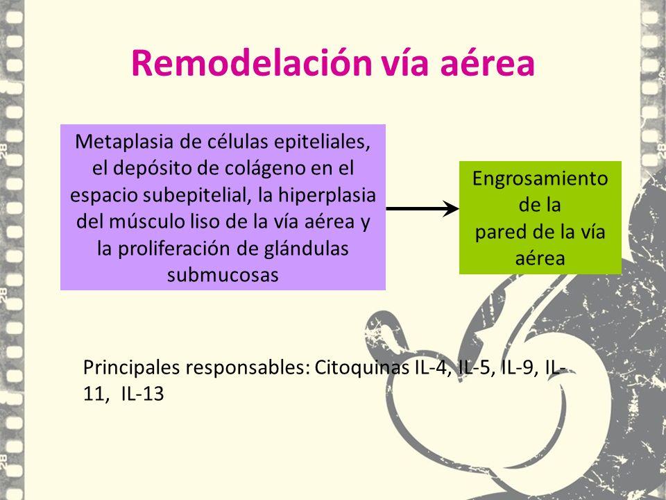 Remodelación vía aérea Engrosamiento de la pared de la vía aérea Principales responsables: Citoquinas IL-4, IL-5, IL-9, IL- 11, IL-13 Metaplasia de cé
