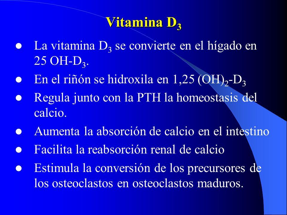 Vitamina D 3 La vitamina D 3 se convierte en el hígado en 25 OH-D 3. En el riñón se hidroxila en 1,25 (OH) 2 -D 3 Regula junto con la PTH la homeostas