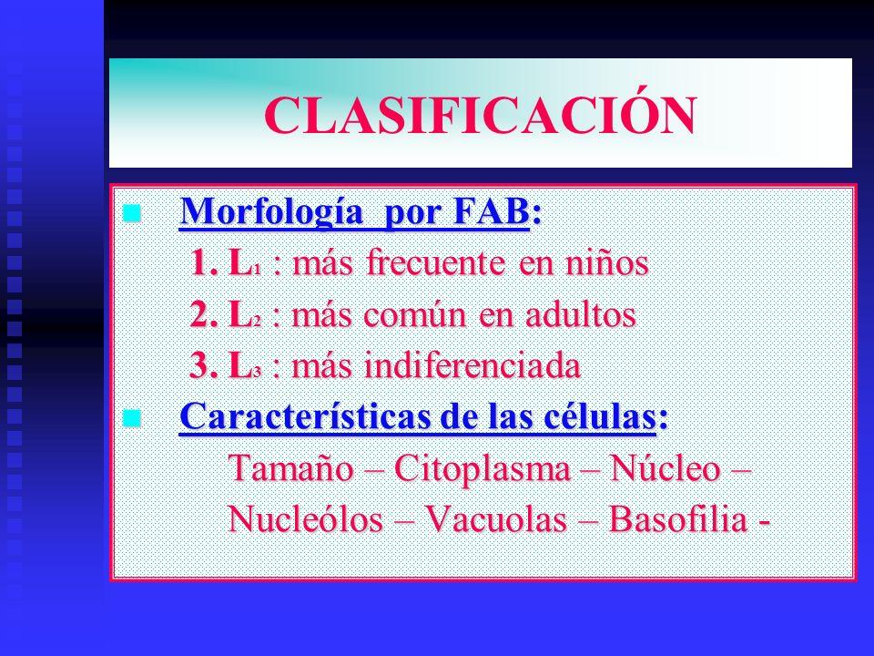 CLASIFICACIÓN Morfología por FAB: Morfología por FAB: 1. L 1 : más frecuente en niños 1. L 1 : más frecuente en niños 2. L 2 : más común en adultos 2.