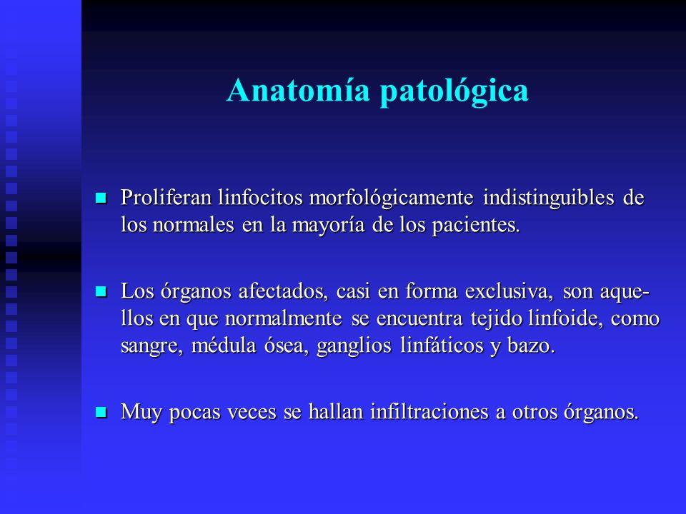 Anatomía patológica Proliferan linfocitos morfológicamente indistinguibles de los normales en la mayoría de los pacientes. Proliferan linfocitos morfo