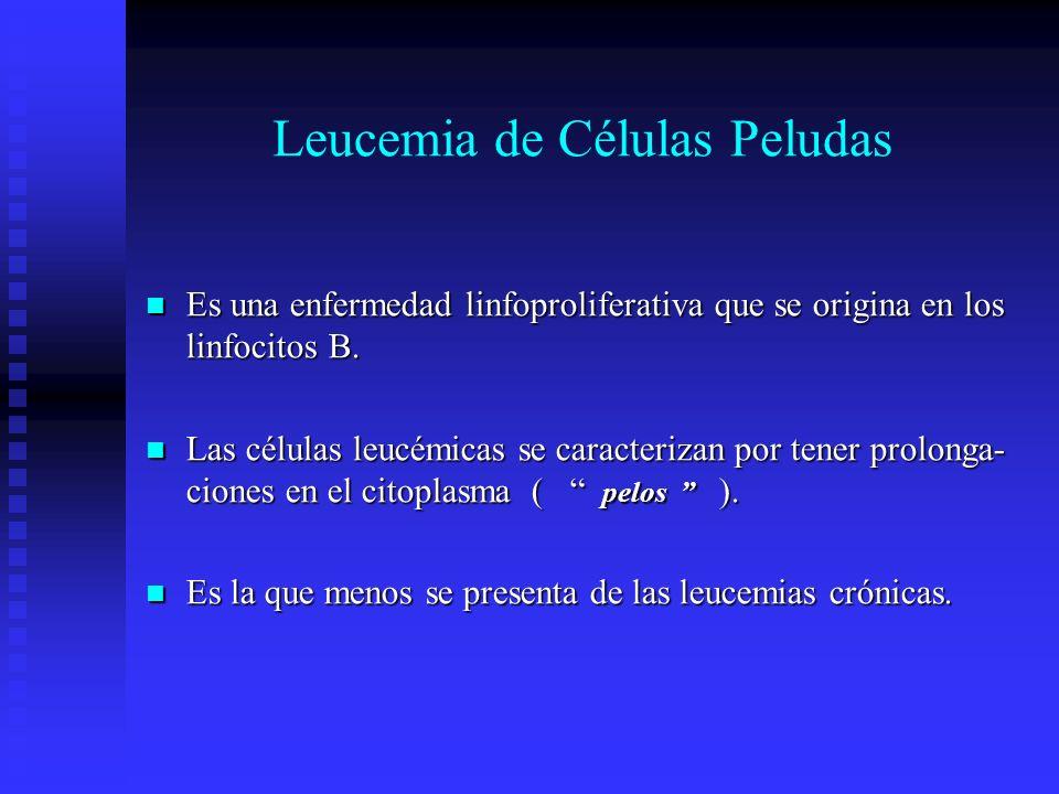 Leucemia de Células Peludas Es una enfermedad linfoproliferativa que se origina en los linfocitos B. Es una enfermedad linfoproliferativa que se origi