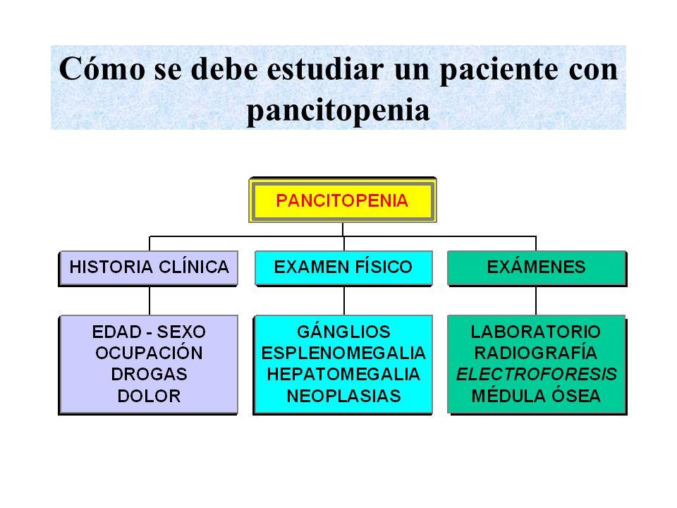Cómo se debe estudiar un paciente con pancitopenia