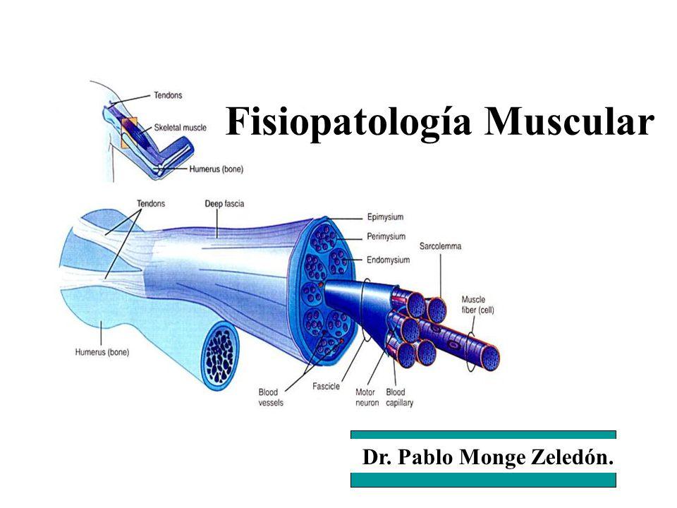 Dr. Pablo Monge Zeledón. Fisiopatología Muscular