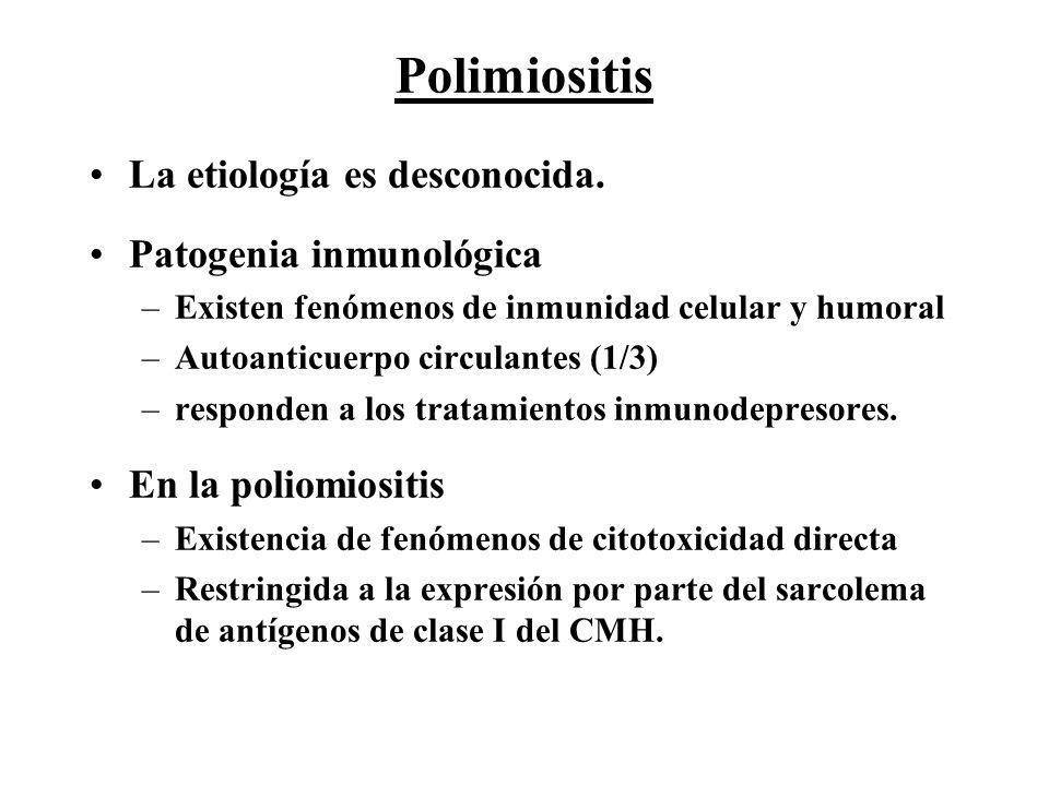 Polimiositis La etiología es desconocida. Patogenia inmunológica –Existen fenómenos de inmunidad celular y humoral –Autoanticuerpo circulantes (1/3) –